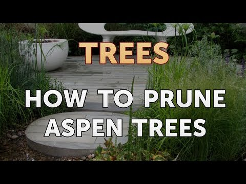 How to Prune Aspen Trees