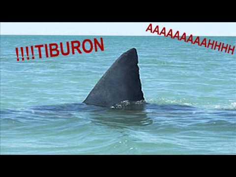 (sonido)musica tiburon