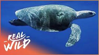Amazing Animals - Animal Journeys [Documentary Series] | Wild Things thumbnail