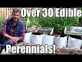 Over 30 Edible Perennials in a Small Garden!