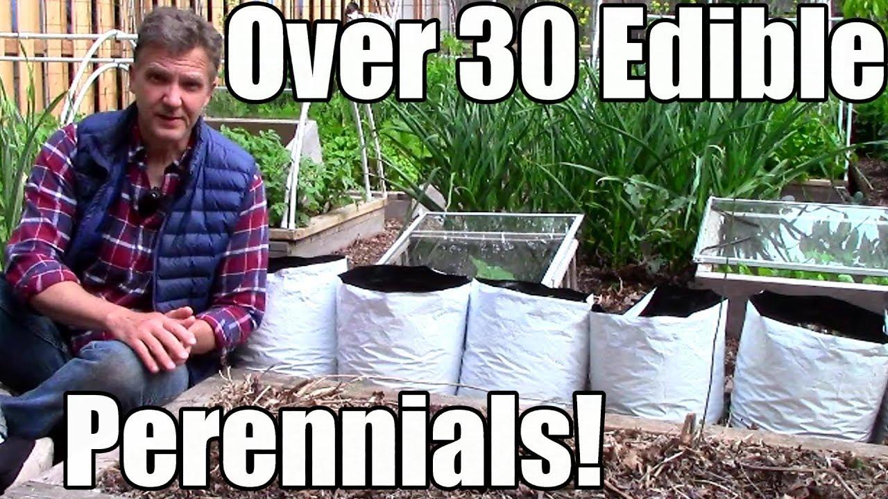 Over 30 Edible Perennials In A Small Garden Youtube