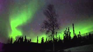 Live Northern Lights from Sirius Sled Dogs