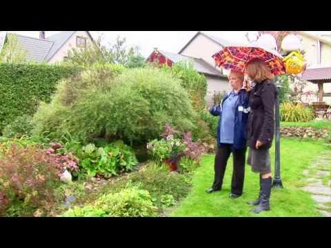 видео: Сад мечты с террасами. Своими руками // forumhouse