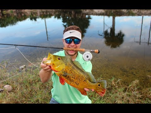 Fly fishing for peacock bass with a 8wt fly rod miami for Fly fishing miami
