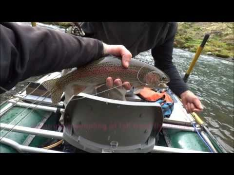 October Trout Fly Fishing:  Willamette River Wild Rainbows