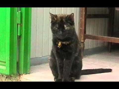 Passioncats adottati firenze tantissimi gattini cercano casa sono