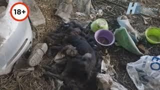 Кладбище домашних животных Брянск