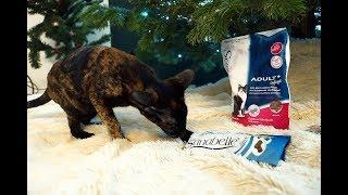 Short в блог: кошка и корм