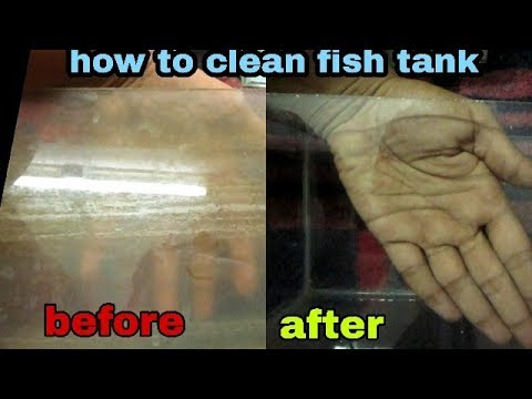 how to clean fish tank glass in tamil