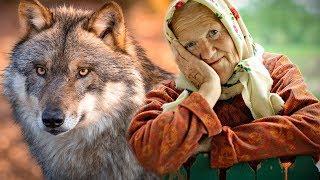 ВОЛЧЬЯ ПРЕДАННОСТЬ! Да какая мне разница - волк он или собака. Он мой друг!