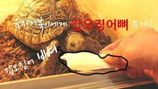 육지거북이에게 갑오징어…
