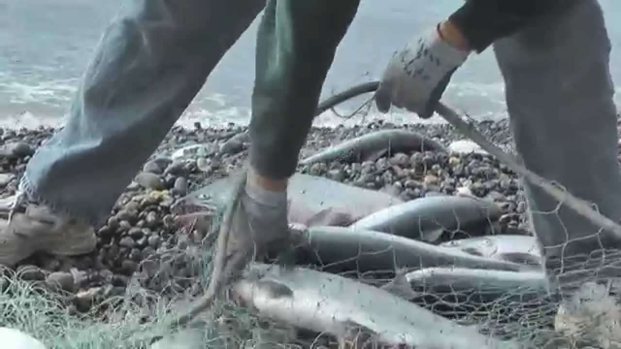 Alaska commercial salmon fishing 2010 youtube for Alaska out of state fishing license