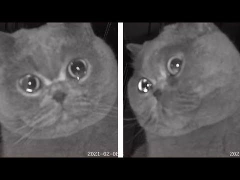 Fu Fu Cat Crying on Security Camera Goes Viral in China