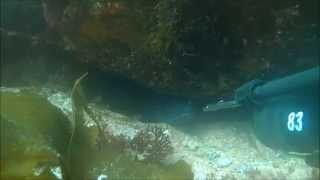 Pesca submarina en A Coruña - congrio 6 kg