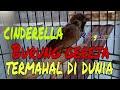 Cinderella  Si Burung Gereja Termahal Di Dunia  Mp3 - Mp4 Download