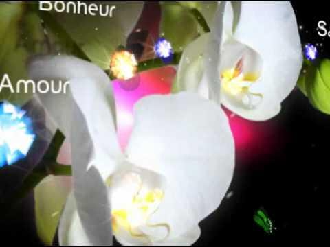 Dromadaire Com 5000 Cartes De Voeux Virtuelles Sur Tous Les Themes Anniversaire Amour Humour Amour Travail Mariages Carte De Voeux Evenements Youtube