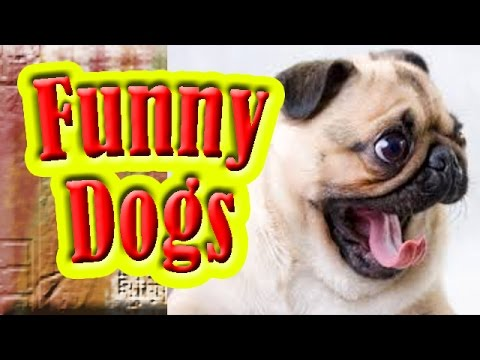 Cute and Funny Dogs: Ultimate cute and funny dog fails video compilation