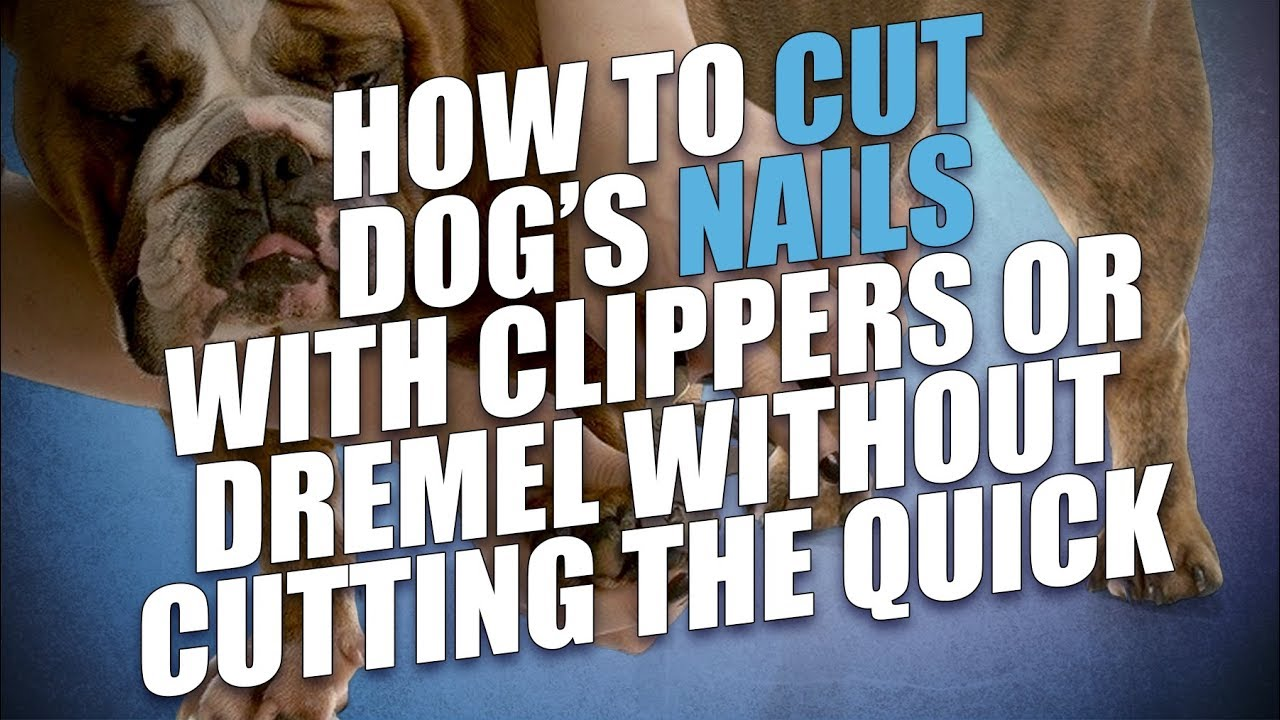 How to Cut Dog\'s Nails with Clippers or Dremel Without Cutting the ...
