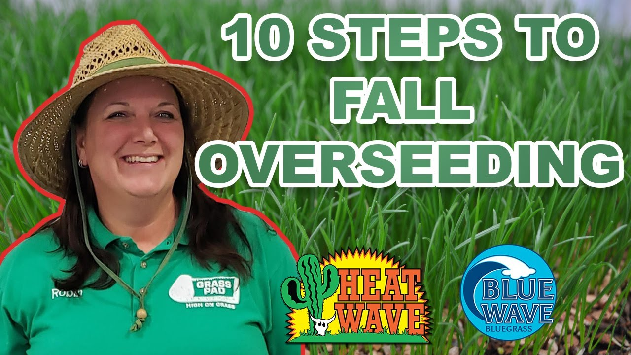 10 Idiot Proof Steps To Overseeding Your Lawn This Fall Youtube This natural grass pad will look, smell, and feel like real grass because it is! 10 idiot proof steps to overseeding your lawn this fall