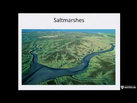 Reclaiming, using, and protecting wetlands, how the Dutch created the Netherlands
