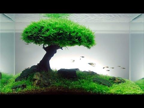 Cara Buat Aquascape Natural Hd Youtube