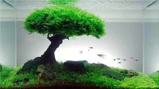 Repeat youtube video Cara buat Aquascape Natural HD