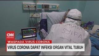 Virus Corona Dapat Infeksi Organ Vital Tubuh