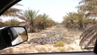 Dry Land Permaculture ( Our Farm in Qatif,Saudi Arabia)