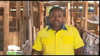 Pig farming the way to go - Kiambu part 1