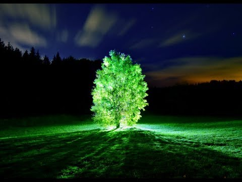 Download Pandora Here We Come : MIT Scientists Develop Method to Make Plants Glow in the Dark
