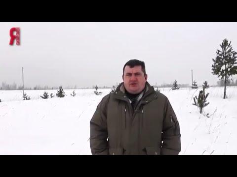 ЯБ2016 Бизнес-идея: мискантус - растение будущего ИП Лысенков А.В.