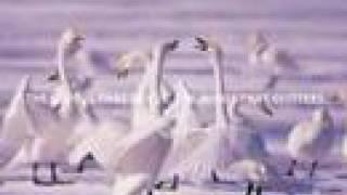 【地球のうた2014】46億年の歴史(最新) http://youtu.be/Rb9Zav1f66o ...
