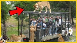 10 Zwierząt które uciekły z Zoo