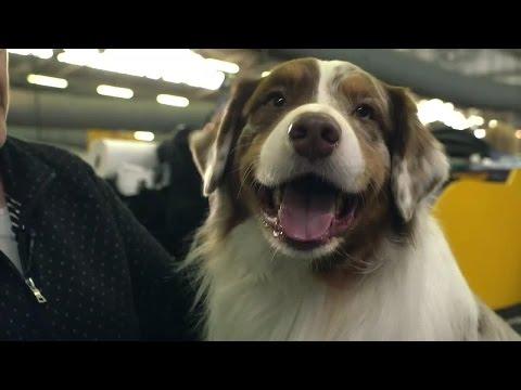 Dog Breed Spotlight: Australian Shepherd