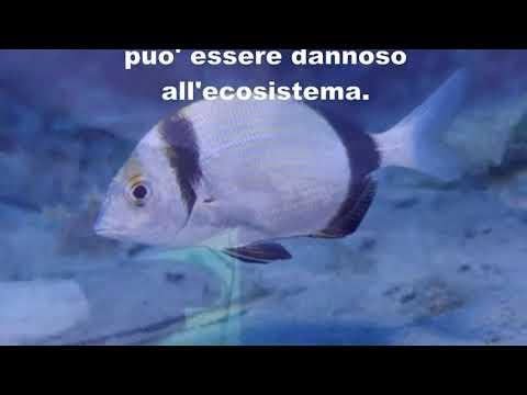 Cilentano.it: Marina di Camerota - Iscolelli la spiaggia che non c
