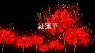 1-hour loop of 紅蓮華 Gurenge (LiSA) from THE FIRST TAKE