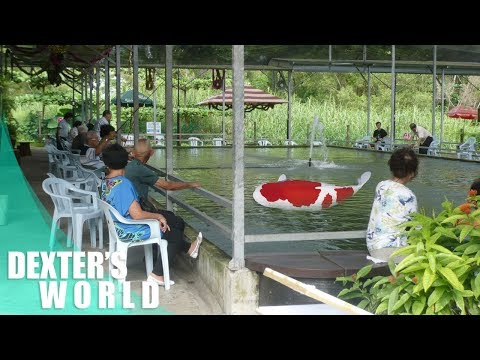 Guide For A Successful Production - Ornamental Fish Farming