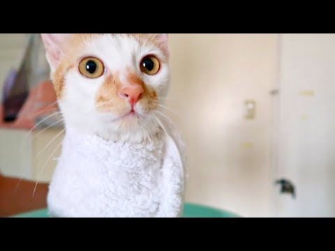 BURRITO KITTEN! After-Bath TOWEL WRAPPED! | SO CUTEEE 😻