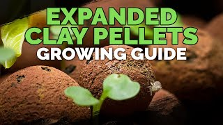 Expanded Clay Pellets (Hydroton) Growing Guide thumbnail