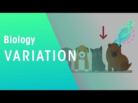 Variation | Genetics |  Biology | FuseSchool