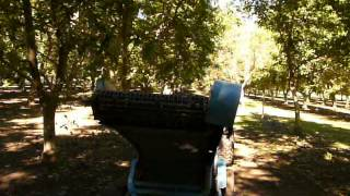 2012 Walnut Harvest -- Tehama County, California