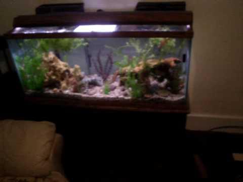 75g red bellied piranha aquarium youtube for Piranha fish tank