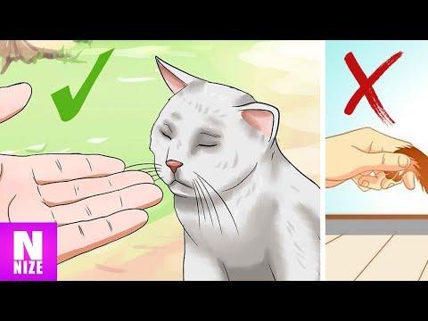 Wie Katzen Dir Ihre Zuneigung Zeigen!