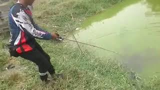 casting gabus babon lure spinner ghoib