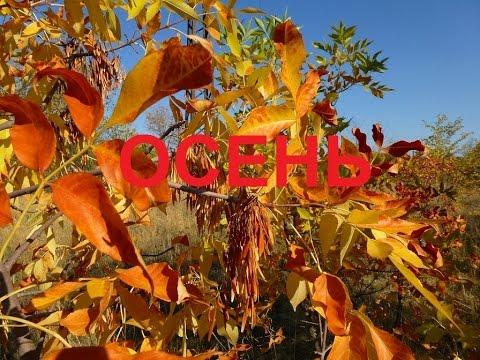 Осень. Очень красивые фото