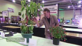 Harrogate Autumn Show: Allotment Diary Dan staging exhibits *Exclusive*