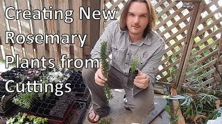 Creating New Rosemary Plants from Cuttings