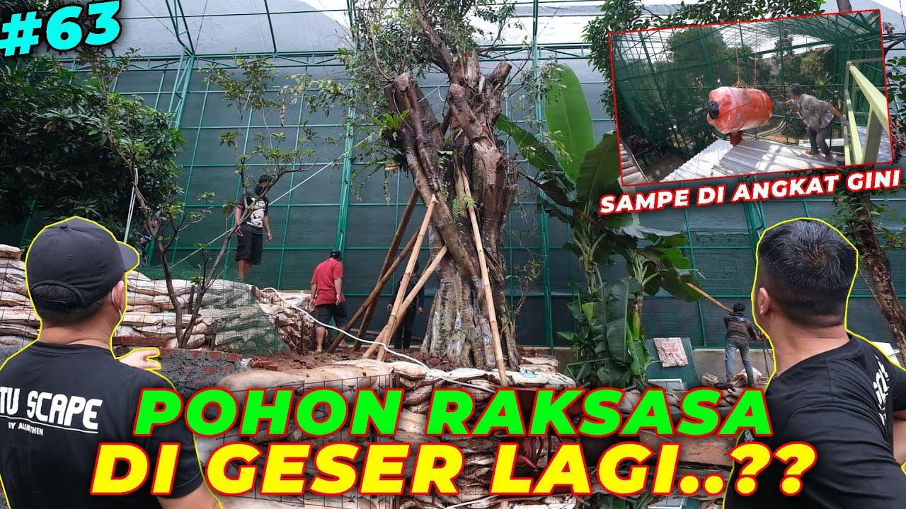 #EPS63 DEHAKIMS AVIARY | DETAIL BANGET..! LANGSUNG DI GESER POHON RAKSASA DI AVIARY
