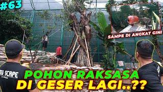 #EPS63 DEHAKIMS AVIARY   DETAIL BANGET..! LANGSUNG DI GESER POHON RAKSASA DI AVIARY