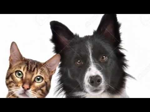Cat And Dog Home Glasgow
